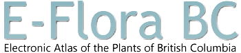 E-Flora BC :: Electronic Atlas of the Plants of British Columbia